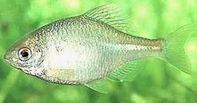 Fische f r den gartenteich for Fische gartenteich geeignet